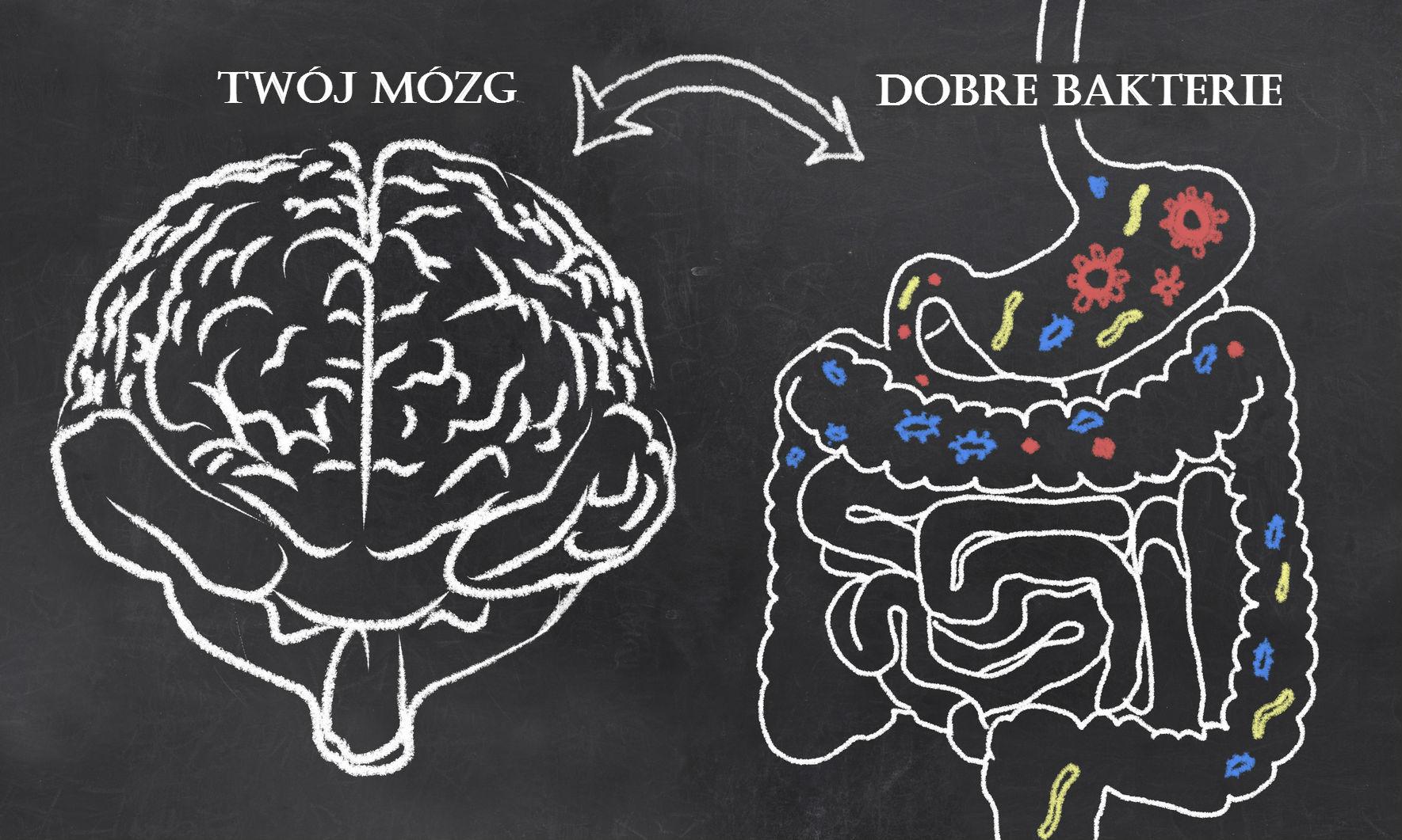 Mózg idobre bakterie